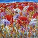 campo in fiore papaveri