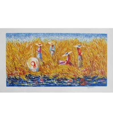 La raccolta della canna palustre